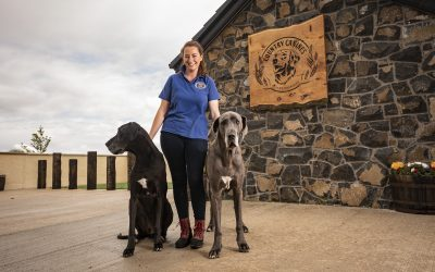 It's a Dog's Life: New Luxury Dog Boarding Facility Opens